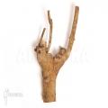 Coffea wood (S)