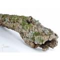 Cork tree (XL)