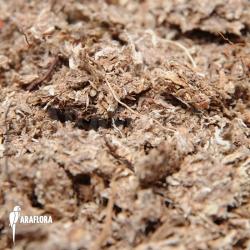 Dried Sphagnum fine
