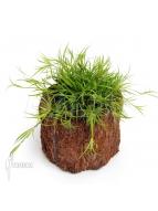 Album Terrariumplanten
