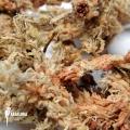 Spaghnum 1kg dried non pressed 1