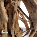 Wurg ficus (Ficus watkinsiana)
