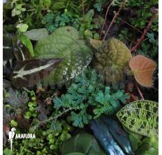 Terrariumplanten
