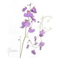 Blaasjeskruid 'Utricularia longifolia'