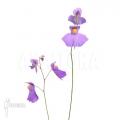 Blaasjeskruid 'Utricularia longifolia 'XL'