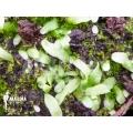 Blaasjeskruid 'Utricularia uniflora'