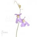 Blaasjeskruid 'Utricularia x alpina x humboldtii 'Nudlinger flair'